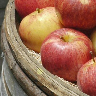 Maass Apfel im Eichenfass